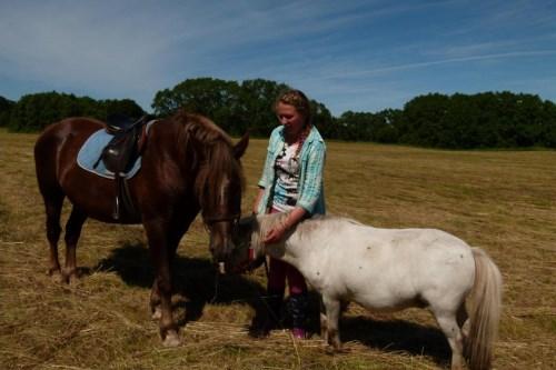 Tegevus_hobune ja poni